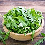 Arugula Lettuce Seeds,1000+ Premium Heirloom Seeds, Fantastic Addition to Your Home Garden! (Isla's Garden Seeds), Non Gmp, 85% Germination Rates, Highest Quality Seed