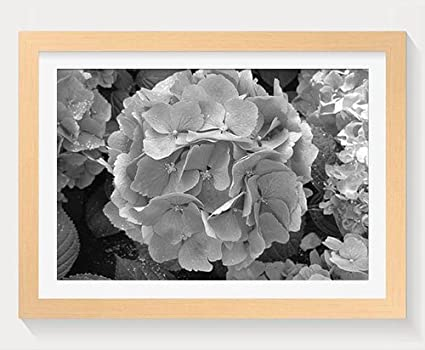 f2055c61b12 Image Unavailable. Image not available for. Color  PUPBEAMO Hydrangea Blue  Flowers - Art Print Wood Frame ...