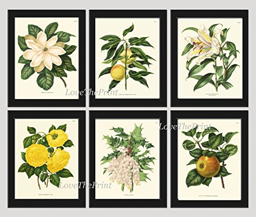 Botanical Flower Print Set of 6 Prints Antique Beautiful White Lily Grapes Fruit Magnolia Yellow Rose Apple Spring SUmmer Garden Nature Home Room Decor Wall Art (Gourmet Settings Frame)