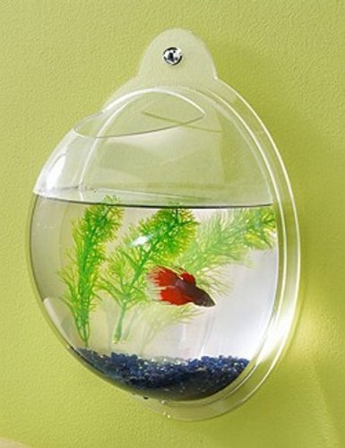 Fish Bubbles - Wall Mounted Acrylic Fish Bowl