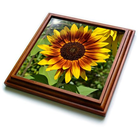 (3dRose trv_30796_1 Beautiful Red and Yellow Sunflower Flower Photography Trivet with Ceramic Tile, 8 by 8