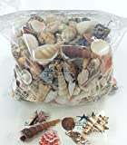 Decorative Sea Shell Mix | Ocean Shells for Craft or Décor | 2 Pounds of Shells for Decoration | Nautical Crush Trading TM