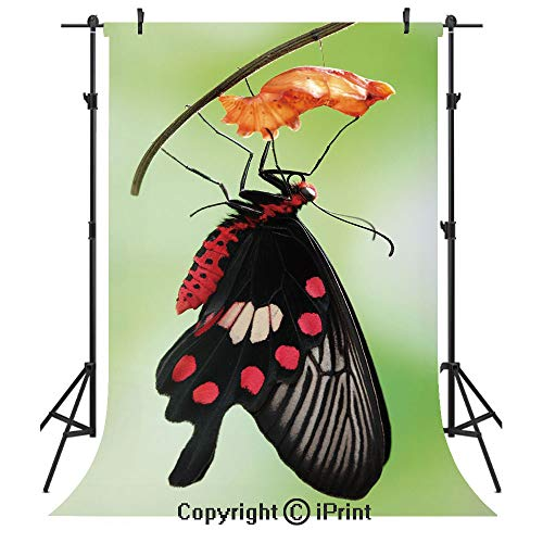 - Swallowtail Butterfly Photography Backdrops,Amazing Moment Coming Out of Cocoon Chrysalis Transformation,Birthday Party Seamless Photo Studio Booth Background Banner 10x20ft,Red Black Green