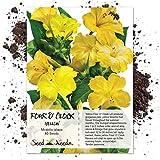 Seed Needs, Yellow Four O' Clock (Mirabilis Jalapa) 60 Seeds