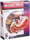 No.09 stomach anatomy model Skynet three-dimensional puzzle 4D VISION Human Anatomy