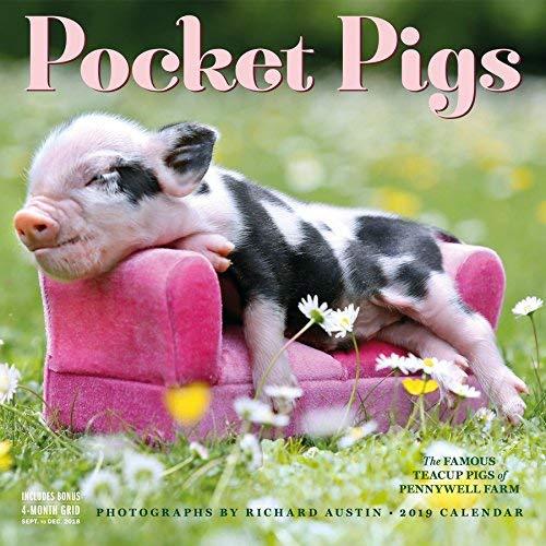 Pocket Pigs Wall Calendar 2019 [12