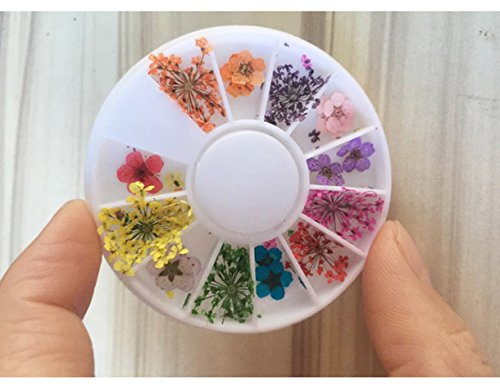 1 Pack Colorful Natural Dried Flowers Nail Art Rhinestone Wheel Mixed Designs Real Dry Flower Accessories Decorations DIY Manicure Nails Tools Tips Kits Fanciness Popular Xmas Snow Holidays Tool Kit