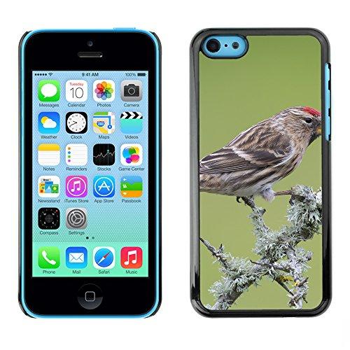 Premio Sottile Slim Cassa Custodia Case Cover Shell // F00013157 oiseau // Apple iPhone 5C