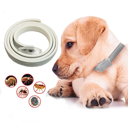 Flea and Tick Collar For Dogs and Cats, 6 Month Protection, Natural Pet Protections Prevent Fleas, Pests, Insects, One Size Fit Most (Guard Spectra)