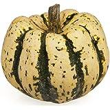 25 Sweet Dumpling Squash Delicata Cucurbita Maxima Vegetable Seeds