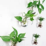 5 Packs Plant Pots Water Plant Containers Glass Flower Pots Wall Hanging Glass Planters Plant Containers Hanging Planters Air Plant Terrariums