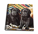 3dRose db_140443_1 Two Black Labrador Retriever Dogs Na02 Zmu0164 Zandria Muench Beraldo Drawing Book, 8'' x 8''