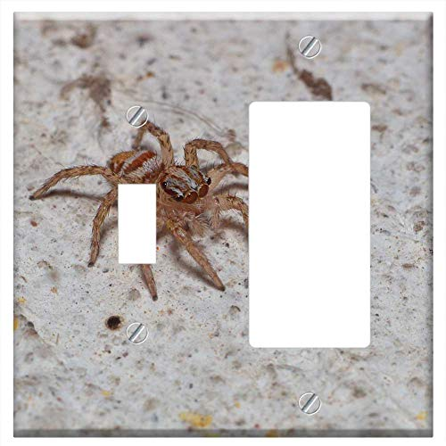 1-Toggle 1-Rocker/GFCI Combination Wall Plate Cover - Spider Nature A Spider-Like Insect Animals