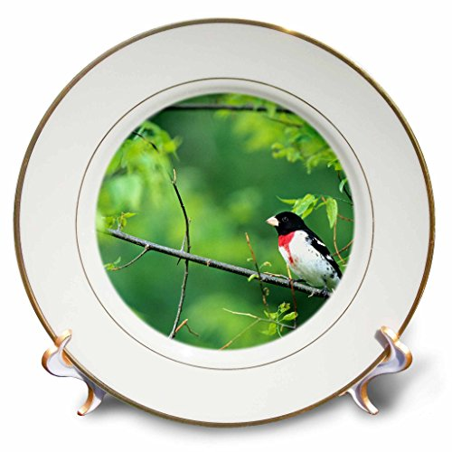 3D Rose Rose-Breasted Grosbeak Male in Common Hackberry Tree-Marion-Il Porcelain Plate, 8""