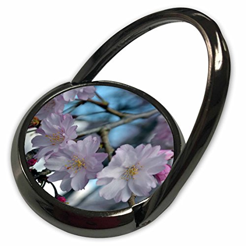 3dRose WhiteOak Photography Floral Prints - Cherry Blossom Tree - Phone Ring (phr_45340_1)