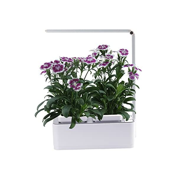 Indoor-Herb-Garden-AIBIS-Hydroponics-Watering-Growing-System-Organic-Home-Herbs-Gardening-Kit-with-Led-Grow-Light-Not-Contain-Seeds-Best-for-Flower-and-Vegetable-like-Thyme-Mint-and-TomatoWhite
