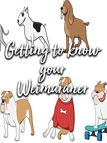 Getting to know your Weimaraner