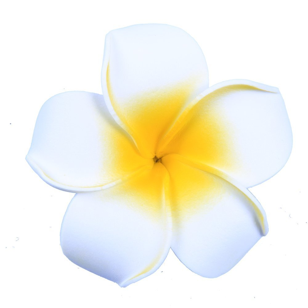 Amazon Anleolife Large White Hawaiian Hair Flowersflorida