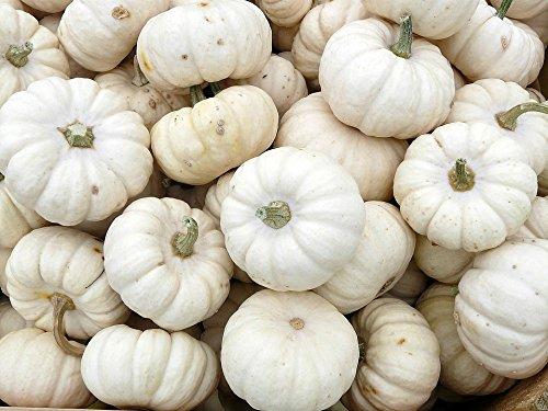 Baby Boo Pumpkin 25 Seeds ()