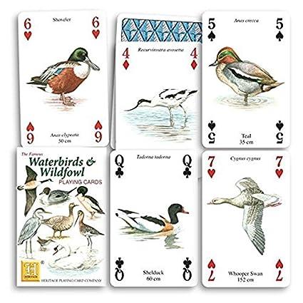 Amazon.com: El Famoso Aves acuáticas Juego de cartas: Sports ...