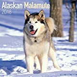 Alaskan Malamute Calendar - Dog Breed Calendars - 2017 - 2018 wall Calendars - 16 Month by Avonside