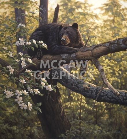 Art Print Greg Stocks - Longing for Apples by Greg Alexander 24