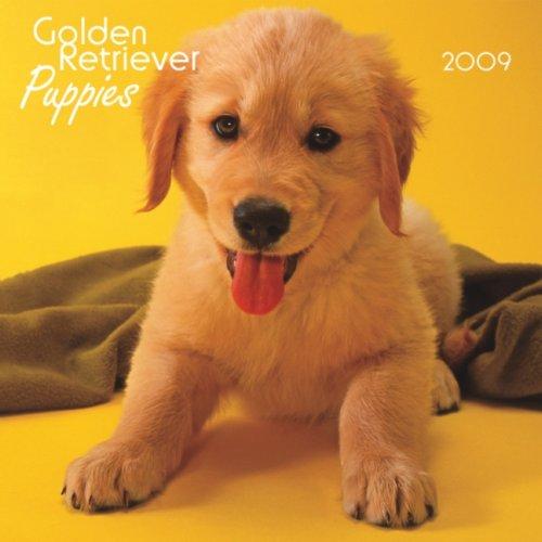 Dog 2009 Mini Calendar - Golden Retriever Puppies 2009 7X7 Mini Wall Calendar