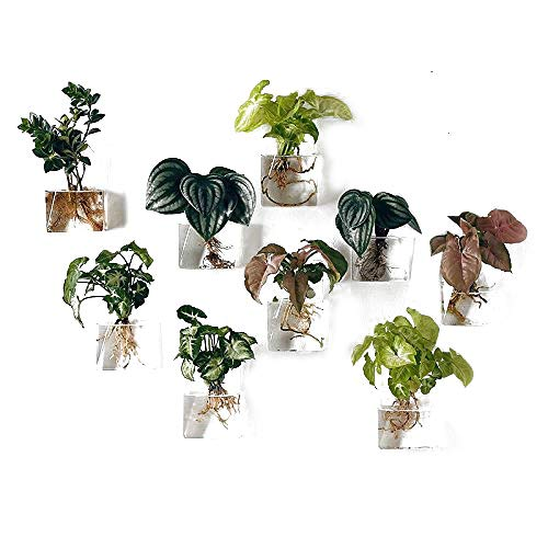 Pack of 2 Pieces Wall Hanging Planters Glass Hanging Plant Containers Glass Air Plant Terrariums Flower Pots Hanging Air Plant Pots Hanging Water Planter Glass Terrarium Hanging Terrarium Flower Pot