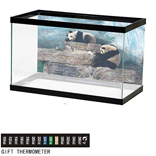 Suchashome Fish Tank Backdrop Panda,Bear in Beijing Zoo on Stones,Aquarium Background,30
