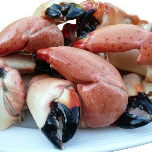 Stone Crab ()