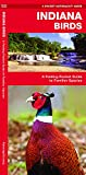 Indiana Birds: A Folding Pocket Guide to Familiar Species (Pocket Naturalist Guides)