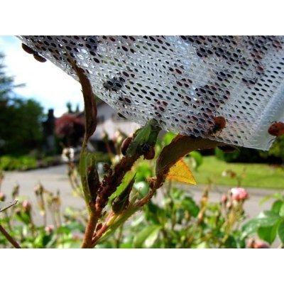 150 Live Ladybugs - Good Bugs - Ladybugs - Guaranteed Live Delivery!