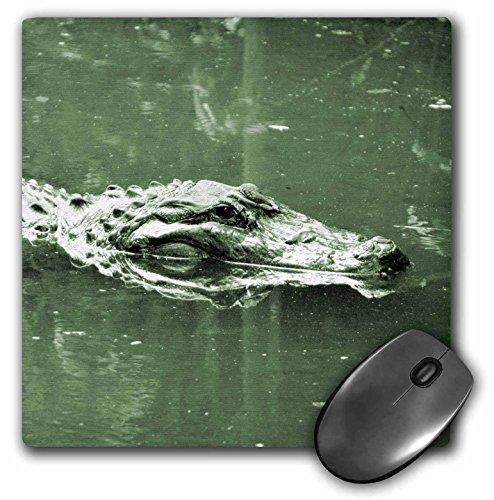 (3dRose Susans Zoo Crew Animals - alligator swimming head green tint reptile - MousePad (mp_182050_1))