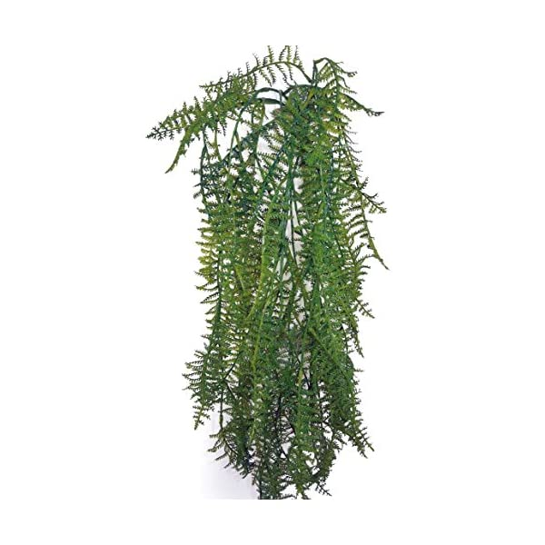 Admired By Nature GG3618-GREEN-4 31″ Artificial Plumosa Hang Bush 5 Stem-4 Pieces, Green