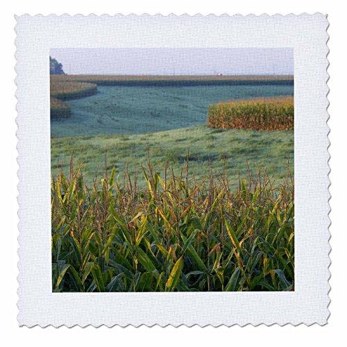 3dRose Danita Delimont - Agriculture - Cornfield agriculture in Nebraska - US26 GHA0064 - Gayle Harper - 10x10 inch quilt square (qs_91539_1)