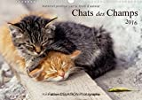 Chats des Champs 2016: 12 images de chats de campagne (Calvendo Animaux) (French Edition)