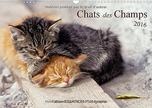 Lire Chats des Champs 2016: 12 Images de Chats de Campagne pdf