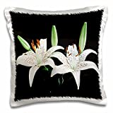 Florene Flowers - White Water Lillies On Black - 16x16 inch Pillow Case (pc_109426_1)