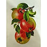 5D Diamond Painting Full Drill,Paint by Number Kits Embroidery Paintings Pictures Arts Craft Hand Drawn Apple 11.8x15.7in 1 Pack by SimingD