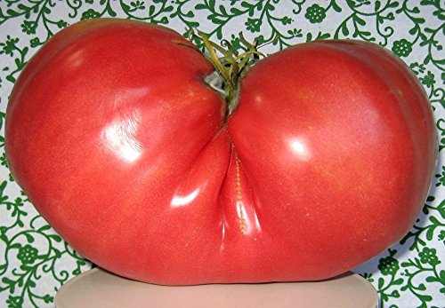 - Big Zac Tomato 15 Seeds- World's Largest Tomato - HUGE
