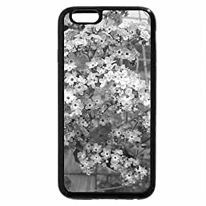 iPhone 6S Plus Case, iPhone 6 Plus Case (Black & White) - Greenhouse photography day 18