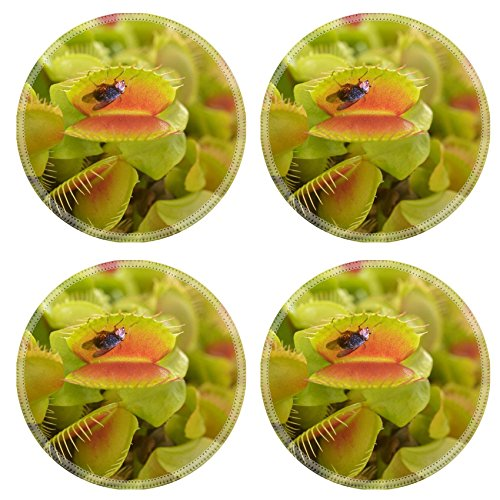 MSD Natural Rubber Round Coasters IMAGE ID 35414516 Venus flytrap Carnivorous plant seconds before it eats a fly