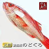 魚水島 のどぐろ 新潟・日本海産 ノドグロ 500g以上・1尾(生冷凍)