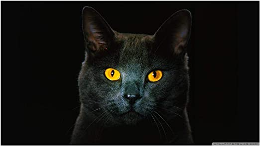 Rompecabezas 300 Piezas Diy Cielo Nocturno Gato Negro Ojos ...