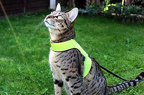 Mynwood - Arnés para Gato de Alta Visibilidad, hasta 8 Meses, a Prueba de Escape: Amazon.es: Productos para mascotas
