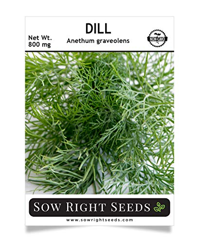Sow Right Seeds - Dill Seed for Planting - All Non-GMO Heirloom Dill Seeds with Full Instructions for Easy Planting and Growing Your Kitchen Herb Garden, Indoor or Outdoor; Great Gift - Seed Dill Weed