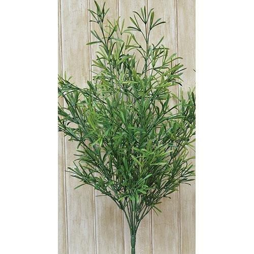 Heart of America Asparagus Bush - Small