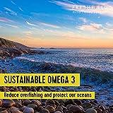 Freshfield Vegan Omega 3 DHA Supplement: 2 Month