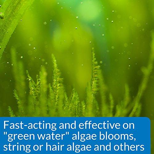 Image of API ALGAEFIX Algae Control Solution 1.25-Ounce Bottle