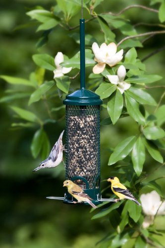 Squirrel-Buster-Mini-44x44x21-whanger-Wild-Bird-Feeder-with-4-Metal-Perches-13lb-Seed-Capacity